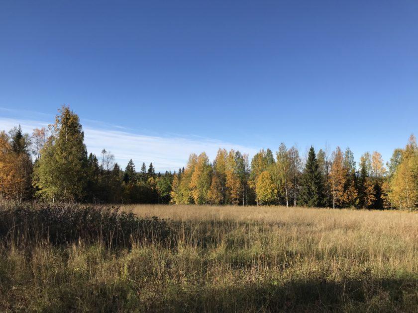 höst i Västerbotten